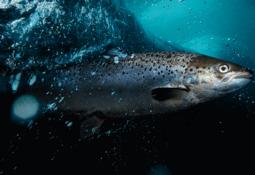 Proveedor de la salmonicultura nombra nueva ejecutiva para transformación digital