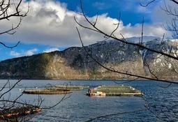 Eide Fjordbruk kjøper selskap for over 100 millioner
