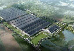 Benchmark to supply eggs to NAP salmon farm in China