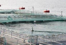 12 millioner til forskning på bærekraftig havbruk