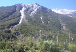 Skretting Chile continúa reforestando el primer bosque de la acuicultura nacional