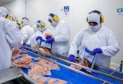 Producción de salmones crece en Magallanes bordeando las 160 mil toneladas