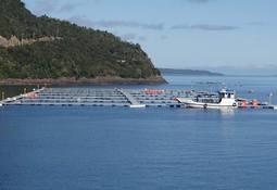 Dan a conocer nuevo reglamento de control ambiental en línea para salmonicultura
