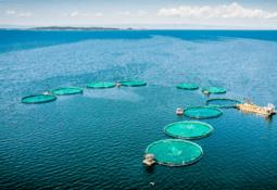 Aquaculture governance in the spotlight at webinar