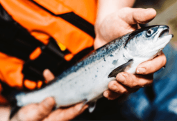 Scottish Sea Farms reports 92% survival rate for 2020