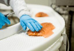 Trabajadores de Huon Aquaculture habrían robado US$3 millones en salmón