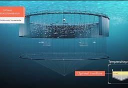 Mowi sistematiza estrategia para enfrentar piojos de mar
