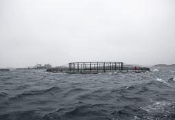 Arrangerer møte om krevende fartøysoperasjoner ved merd