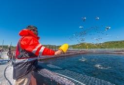 Destacan centros de salmón coho de Invermar y Camanchaca por histórico desempeño