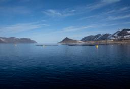 Minus for Arctic Fish i fjerde kvartal