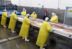 Salmones Austral afirma que plantas en Quellón son lugares seguros para trabajar