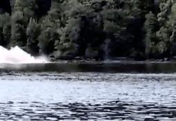 Operarios de centro Mowi reportan inédito ataque de orcas a ballenas sei