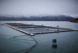 Salmonicultores de Magallanes lanzan código de ética para la industria
