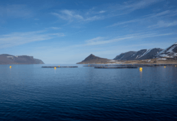 Arctic Fish closes in on new farm licences