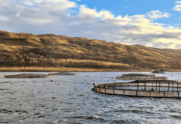 Salmon farmer saving planet and cash with hybrid power