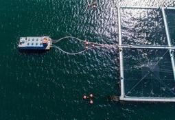 Salmones Camanchaca, BioMar y Skretting firman inédito acuerdo para sostenibilidad