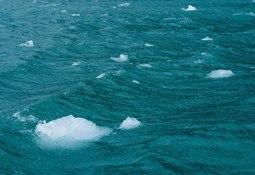 Cermaq anuncia apoyo a importante campaña mundial contra la pesca ilegal