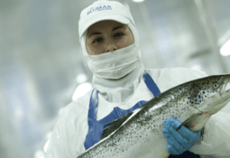 Salmon farmers in Chilean stock market top 20