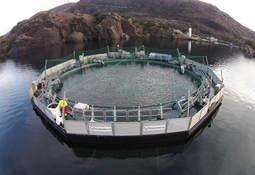 Productor de salmón compra jaula semicerrada flotante para 1 millón de smolts