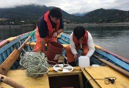 Proyecto binacional busca comprender origen de las FAN en el litoral chileno