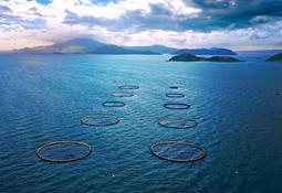 World-first for barramundi farmer Australis Aquaculture
