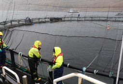 Covid rules flexibility 'used sparingly' by salmon farmers