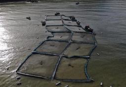 Los desafíos pendientes en certificación para estructuras de cultivo de salmón