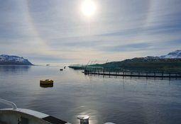 Ice Fish Farm investerer tungt for oppskalering