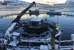 Innovador proyecto iFarm de Cermaq muestra positivo impacto en salmones