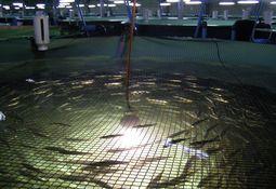 Sealand Aquaculture espera reevaluación del SEA para su piscicultura de Magallanes