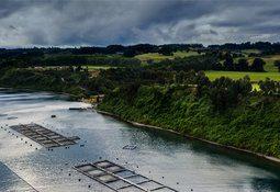 Salmones Camanchaca reconoce pérdida de 162 mil peces por bloom de algas