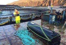 Dette skal forbedre fiskevelferden til rensefisk