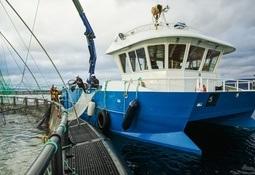Søker dispensasjon: - Manuell lusetelling er en påkjenning for fisken