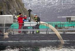 Fiskevelferdsprosjekt: - Ser forbedringer i merden med det blotte øyet