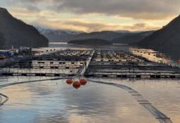 Nova Austral obtiene certificación BAP para piscicultura, planta y centros