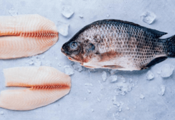 US sales expansion for Costa Rica tilapia producer