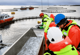 'Normal growth and good welfare' for salmon kept 30m deep for 15 weeks
