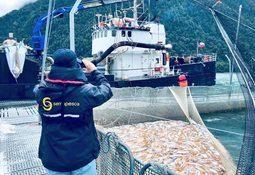 Salmones Camanchaca reconoce nueva mortalidad de 500 mil peces por FAN