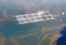 SMA instruye medidas urgentes frente a florecimiento de algas nocivas