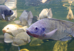 Solar lights 'improve fish growth and feed conversion'