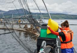 Mowi Scotland doubles first quarter harvest