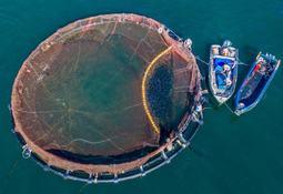 Apuestan por nanotecnología antifouling basada en cobre para mejorar redes acuícolas