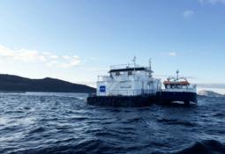 Mistanke om PD hos Svanøy Havbruk