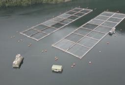 AquaChile inicia alimentación remota a salmones usando tecnologías 5G y satelital