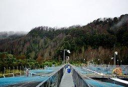Corte Suprema suspende ampliación de piscicultura ligada al grupo AquaChile