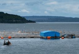 La estrategia de Salmones Austral que logró tres centros certificados sin antimicrobianos