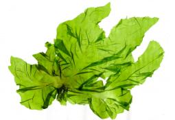 Extractos de algas muestran efectos positivos en la conservación de filetes