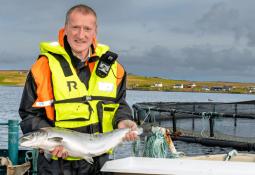 Exportaciones de salmón escocés a la Unión Europea aumentan 74% pese al Brexit