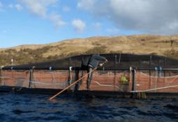 RSPCA clears Mull salmon farm of welfare breach