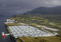 Proyectan producir 15.000 toneladas de salmón con tecnología de flujo continuo